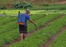 Agricultor borrifando agrotóxico em uma plantação