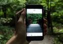 Pessoa fotografando uma floresta com o celular