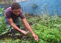 Estudante cultivando na horta