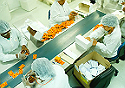 Imagem de produção de medicamentos em Farmanguinhos