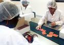 Pessoas trabalhando na produção do medicamento