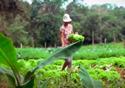 Mulher cuidando de uma plantação