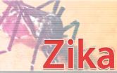 Um mosquito grande escrito zika