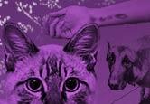 Imagem montada com foto de gato, cachorro e braço humano com arranhões