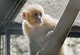 Frame de vídeo no Youtuber com imagem de macaco