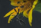 Imagem de mosquito pousado em pétala de flor