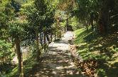 Foto da trilha do Arboreto de dia com sol