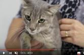 Frame do documentário sobre esporotricose mostra gato no colo de uma pessoa