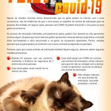 Infográfico borda a relação entre pets e pandemia