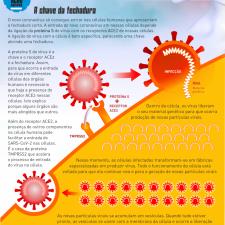 Infográfico mostra como o coronavírus ataca nossas células